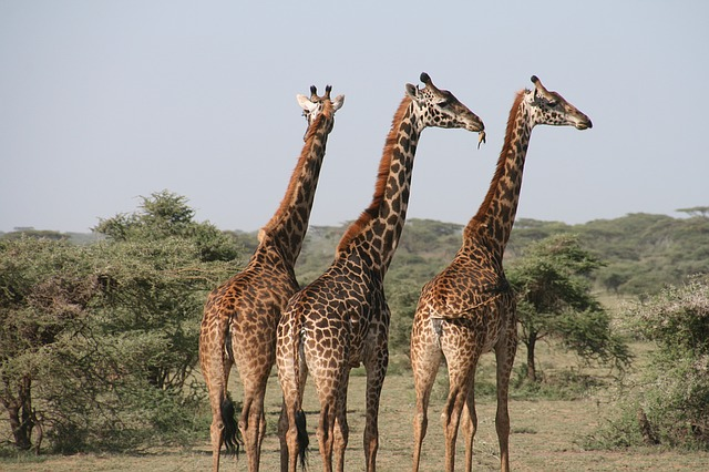 Safari en Gambia