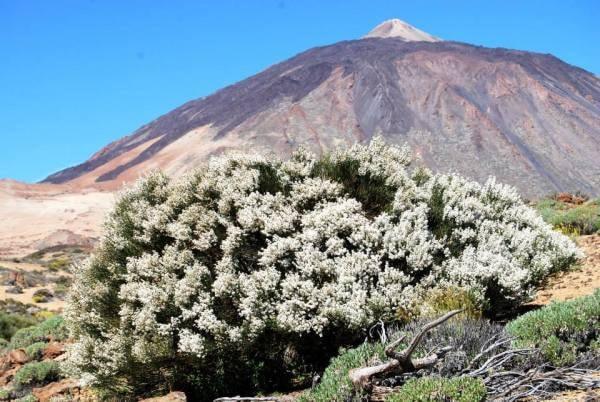 ruta de senderismo Tenerife